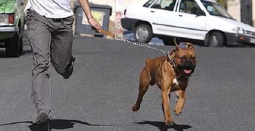 سگ گردانی در گرگان ممنوع شد